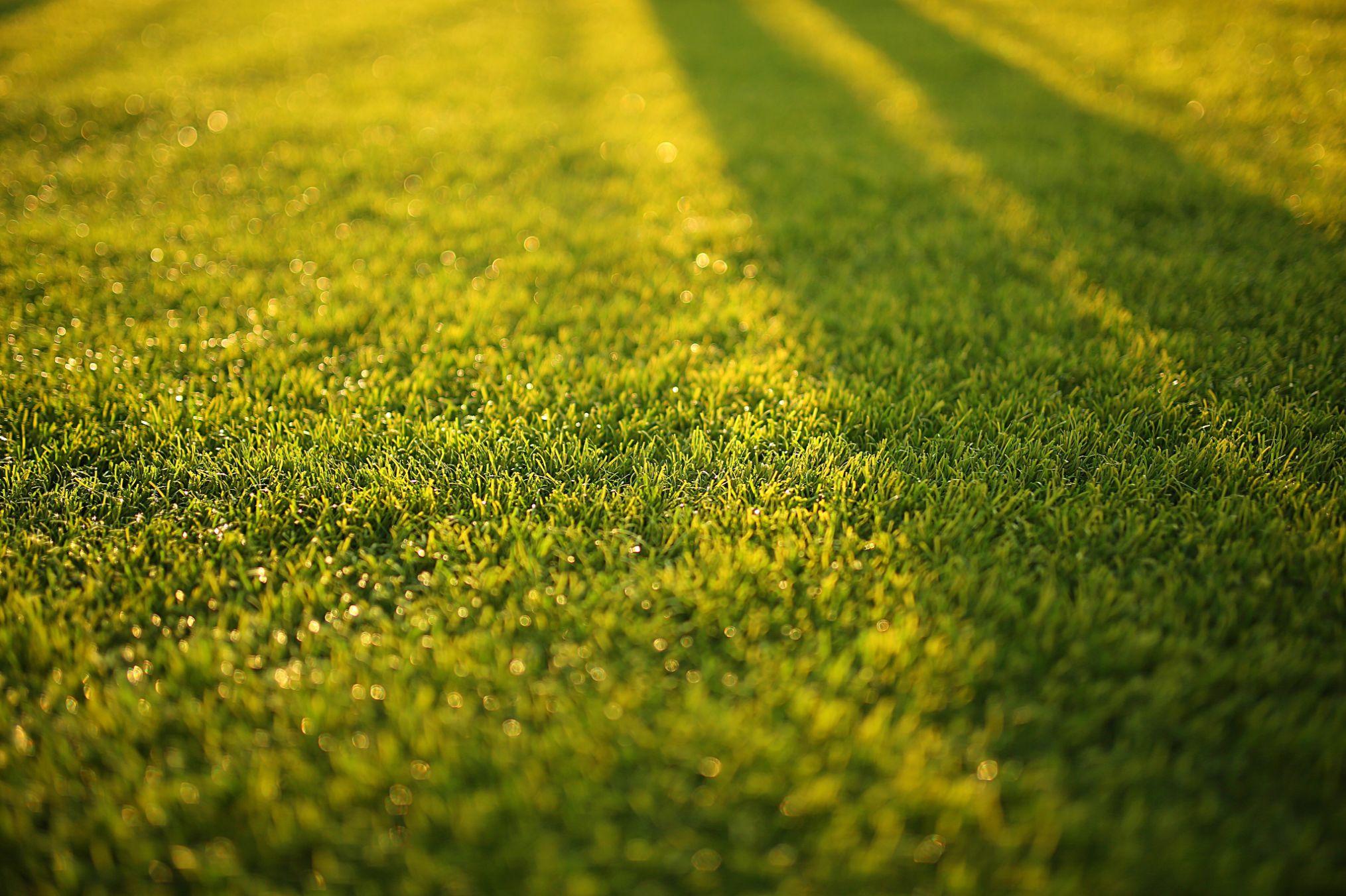 Lawn coring in Frankston