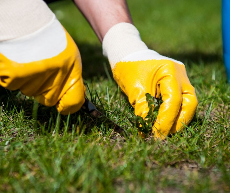 Weed removal in Frankston