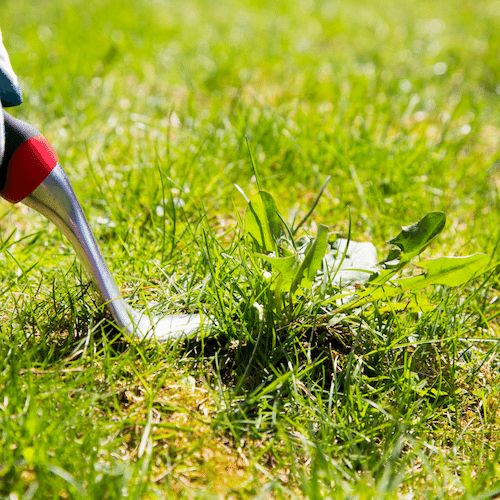 Weed removal service in Frankston